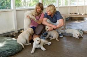 Nanquim, personagem de Memórias de um cachorro de pet terapia, também é um labrador como o animal de estimação de Marley e eu