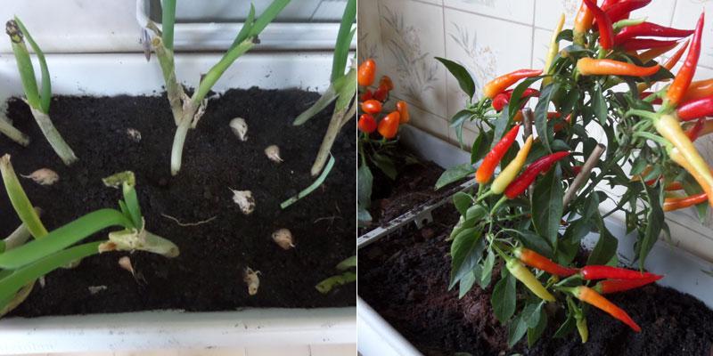 jardim e horta em casa | foto: conversa de menina